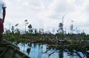 Pandemi tak mampu menghalangi semakin hilangnya hutan indonesia
