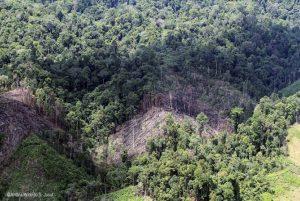 Pembalakan terus terjadi, hutan di kalimatan terancam hilang