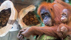 Pedagang orangutan dan penjual sisik trenggiling dihukum